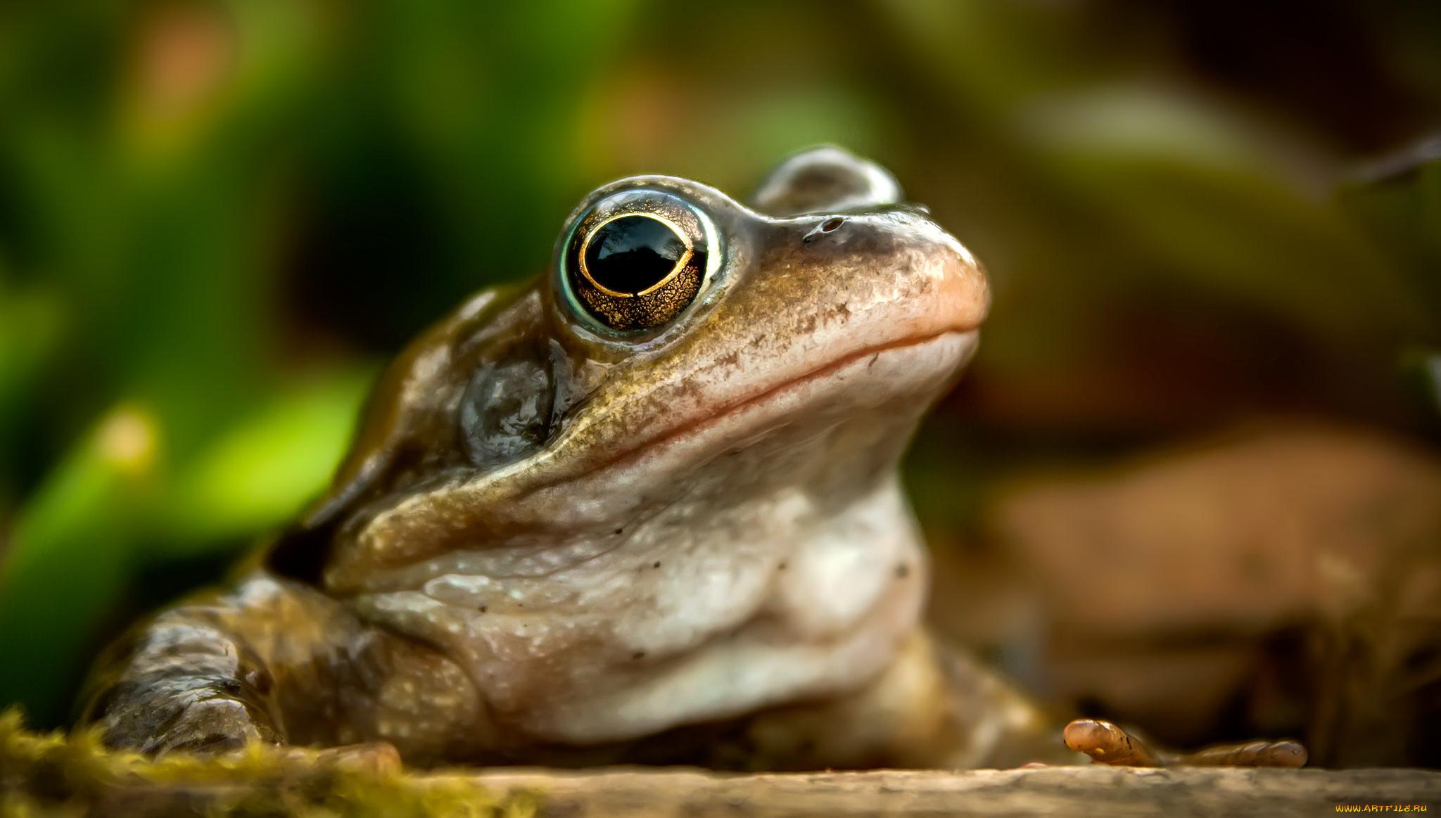 светлый лягушонок красивая картинка под котельную